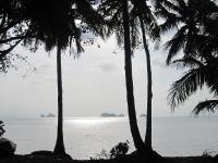 Palmen am Strand / Koh Samui