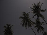 Nachtaufnahme Palmen und Sterne