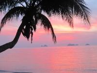 Palme am Strand während Sonnenuntergang