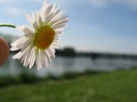 Nahaufnahme Blume Rhein