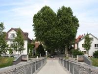 Rheinvorland Baum in Herzform