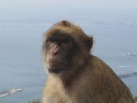 Affe auf einem Berg mit Meeresblick