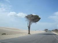 Baum in der Wüste Sahara Sand