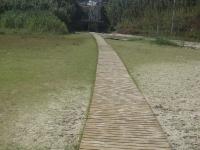 Grüner Strand mit Holzweg