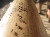 Nahaufnahme Makro von laufenden Ameisen