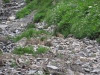 Murmeltier in Samnaun im Gletscherspalt