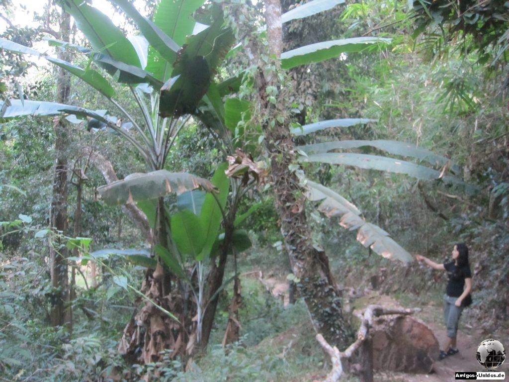 Pfad zum Wasserfall im Dschungel von Chiang Mai