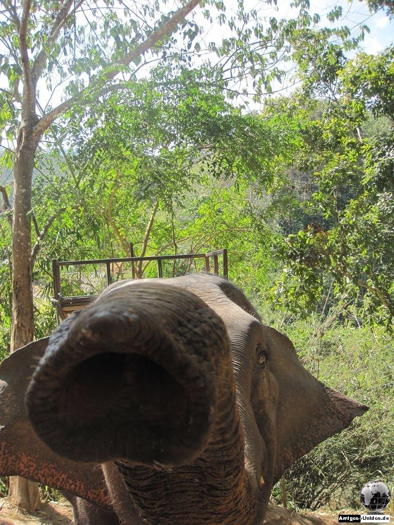 Elefantenreiten in Chiang Mai