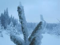 Tannenzweig im Winter