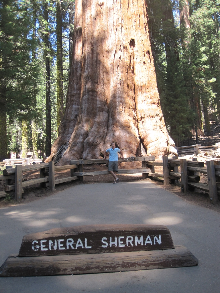 General Sherman - Sequoia National Park