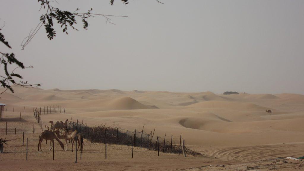 Dubai VAE - Ein Urlaub der Superlative